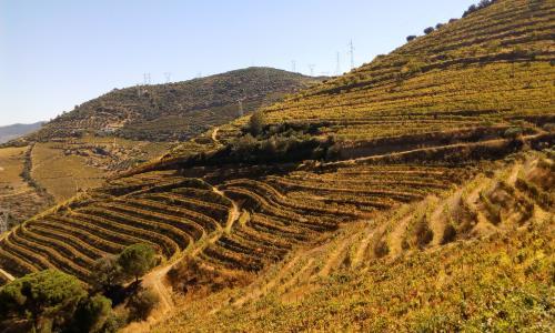 Beautiful, beautiful Porto Vines